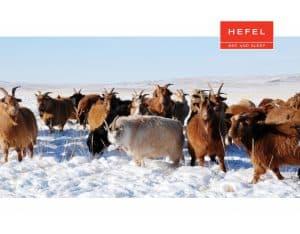 Hefel Himalayan